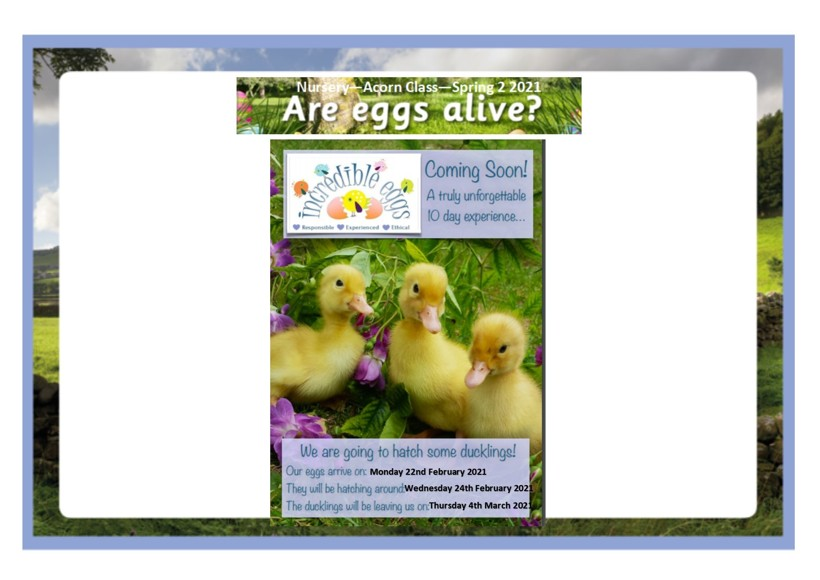 Are eggs alive termly overview4